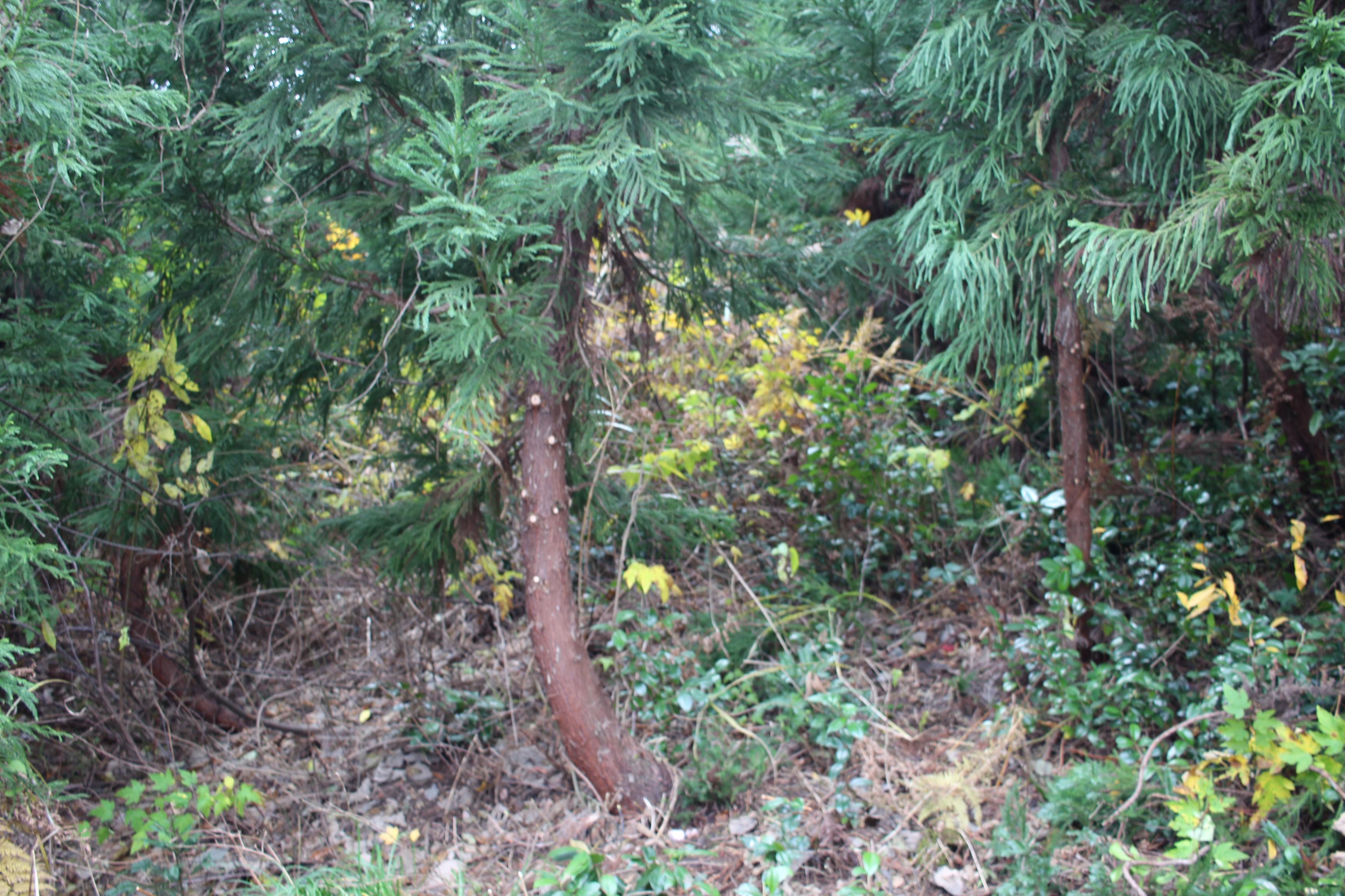 昨年の森の様子