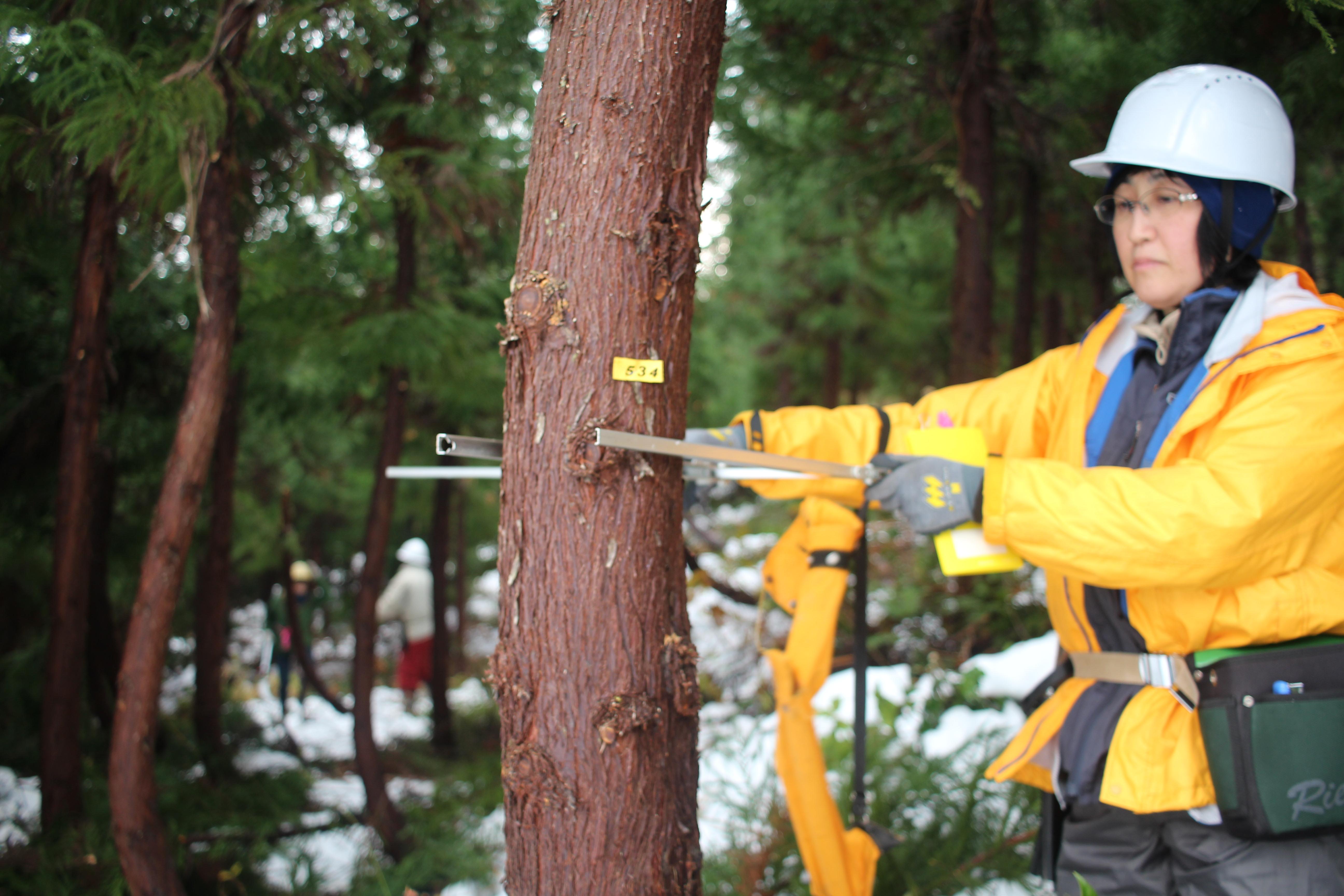 木の身体測定