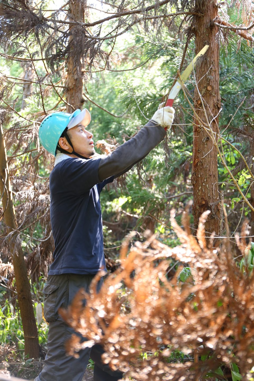 林業体験の様子