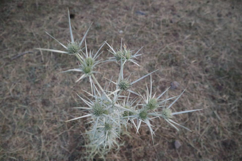 とげとげの植物