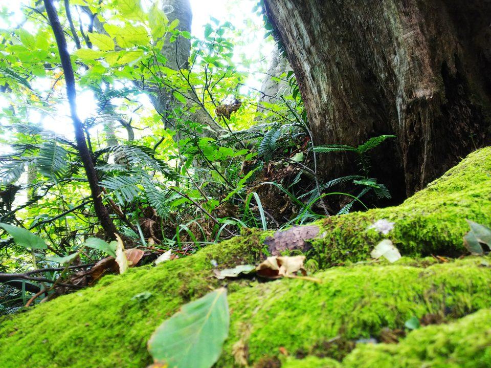 苔や木々が生えている様子