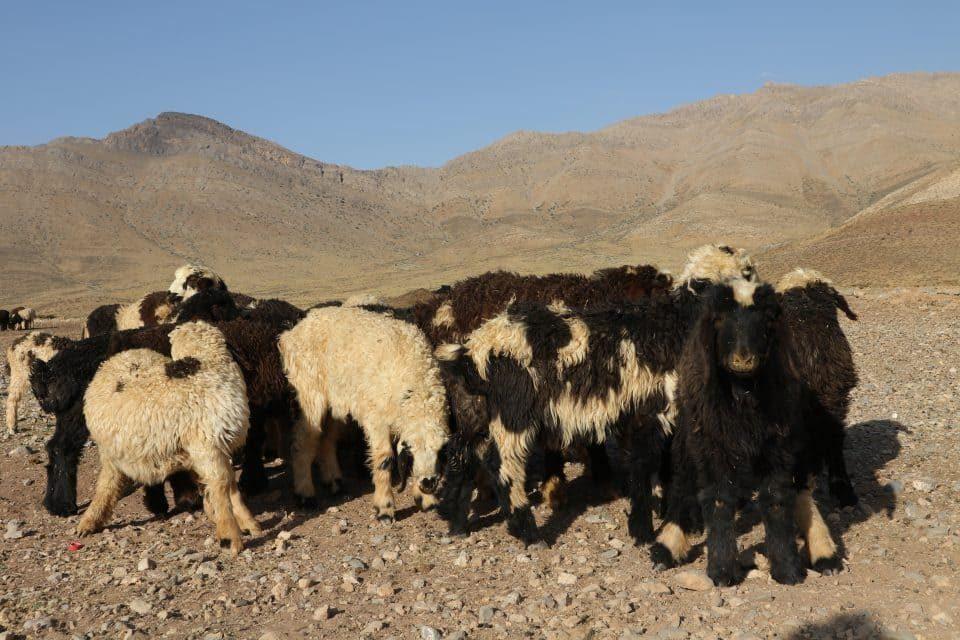 artgabbeh wool